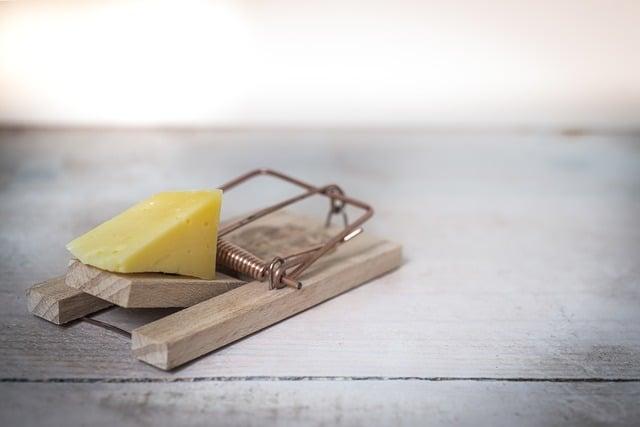 Schädlingsbekämpfung mit Käse