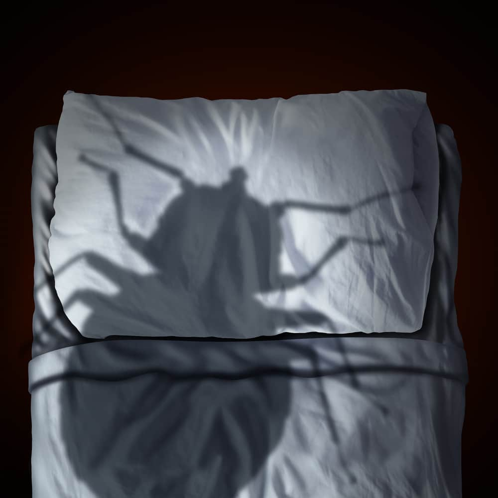 Bettwanzen